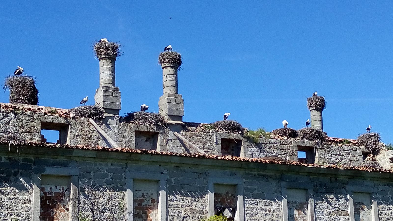 Cigüeñas posadas en sus nidos